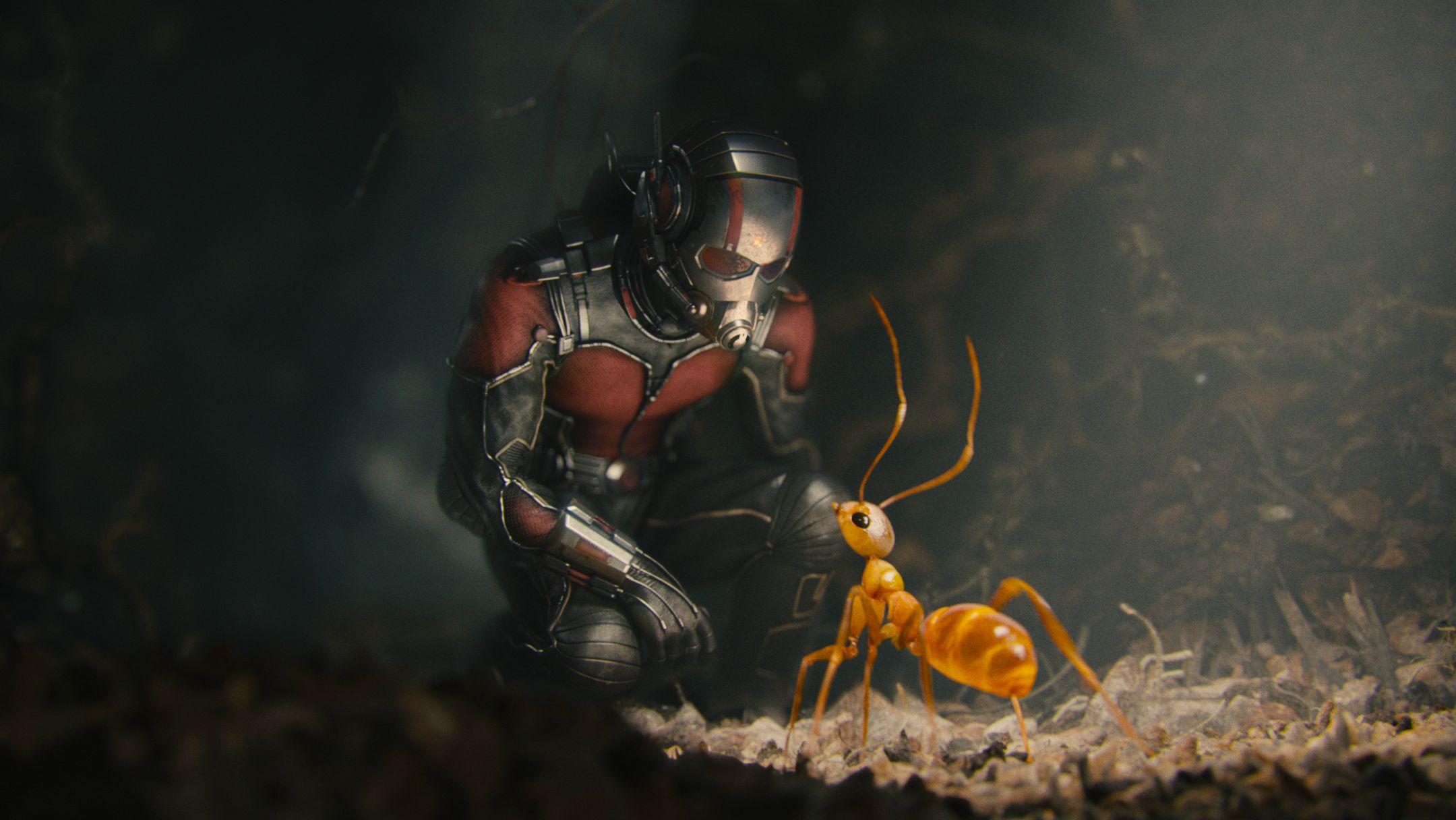 DVD-Ant-Man-LARGE