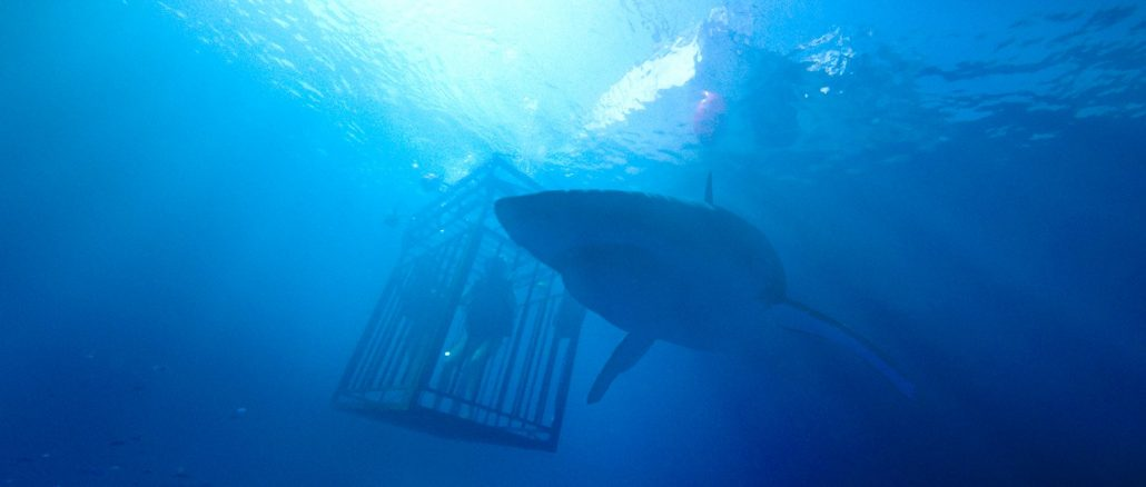 47-meters-down-shark-and-cage-wide
