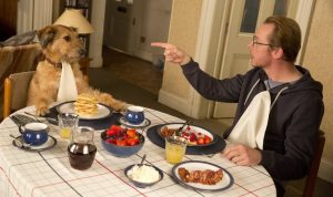 DVD-absolutely-anything-breakfast-with-dog