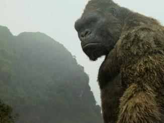 DVD-Kong-pensive